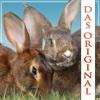 Kaninchenforum