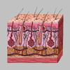 Dermatology by AIMapps
