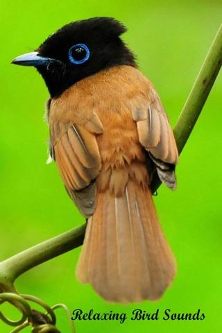 Relaxing Bird Sounds screenshot 1