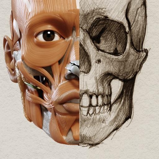 3D-Anatomie für den Künstler Bei Catfish Animation Studio S.r.l.