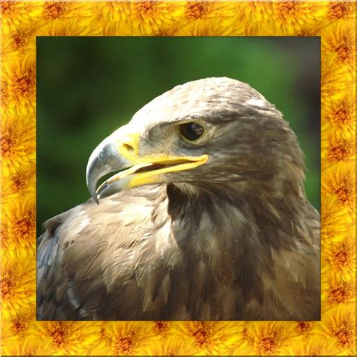 Wild Golden Eagle Simulator iOS App