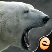 益智拼图 – 益智欢乐北极熊为孩子 [iOS]