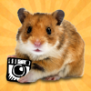 hamstergram - make people hamsters instantly and more!