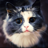 Cat Photos and Videos | No advertisements