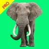 Animal Sounds Pro - Nature Voice Effects Simulator - Ying Zheng