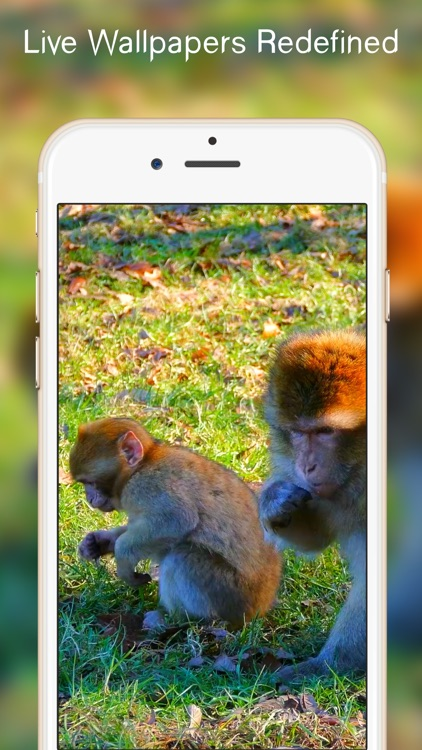 Cute Live Wallpapers Free For IPhone