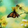 Butterflies Wallpapers HD| Quotes , Art Pictures