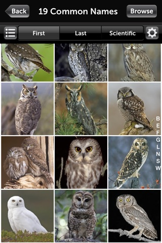Audubon Owls Guide screenshot 2
