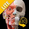 Sistema Muscular - Atlas de Anatomia em 3D - Lite