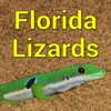 Florida Lizards – Guide to the Most Common Species