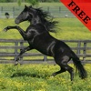 Horse Video and Photo Galleries FREE