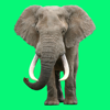Animal Sounds Voice Effects Simulator for Toddler