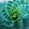 Succulents Plant 101:Growing Guide and Care Tips