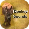 Donkey Sounds - Funny Sounds