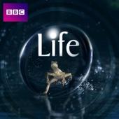 Life - Life Cover Art