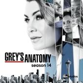 Grey's Anatomy, Saison 14 (VOST)