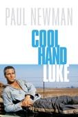 Stuart Rosenberg - Cool Hand Luke  artwork